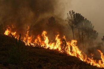 Αποφυγή δασικών πυρκαγιών